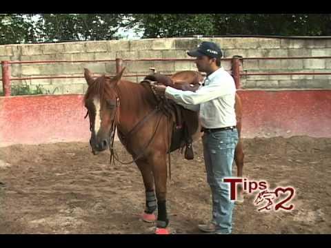 Tips el Morao.- CÓMO CONVENCER AL CABALLO PARA QUE DÉ ESTRIBO (3)