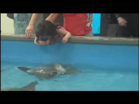 Petting the Sting Rays @ the Tarpon Springs Aquarium Video