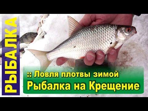 видео ловля плотвы на сало ютуб