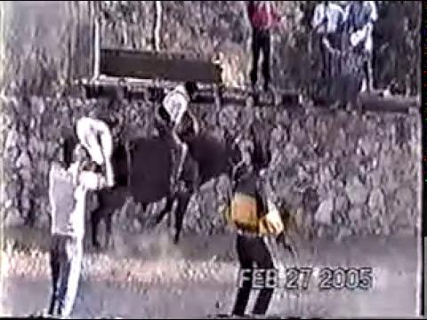El Gallito de Rincon de Tamayo Vs El Revolver Y El Chilaquil