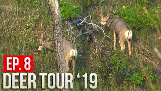 SPOT AND STALK MULE DEER! - Can Grant Close the Distance?! | Nebraska Public Land Bowhunting