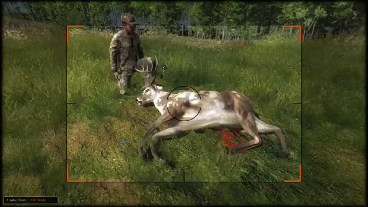 Whitetail hunter bogen