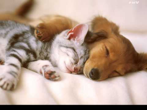 Lullaby for animals.   Колискова для звірят.