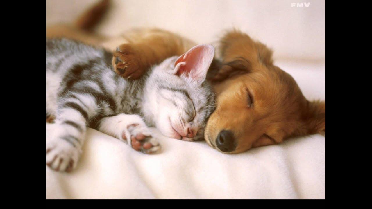 Sleeping baby animals