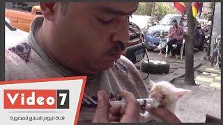 بالفيديو.. ميكانيكى يتبنى 5 قطط حديثى الولادة ويرضعهم