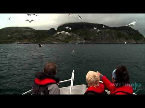 Norway Tourism: Wildlife and Nature