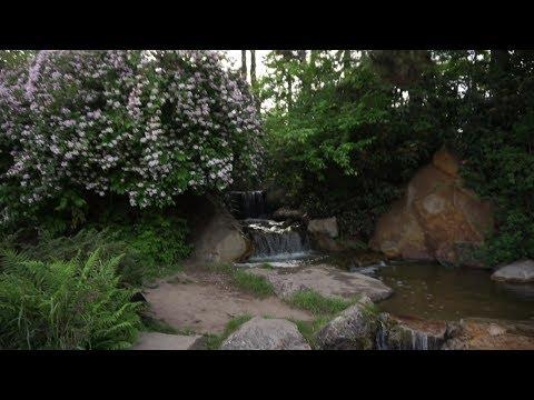 Japanischer Garten in Düsseldorf!