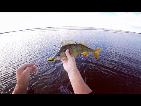 рыбалка на окуня на неве