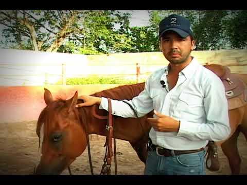 Tips el Morao.- COLOCACIÓN CORRECTA DE UN FRENO EN EL CABALLO (1)
