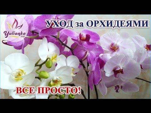 Орхидеи. Основные принципы правильного ухода