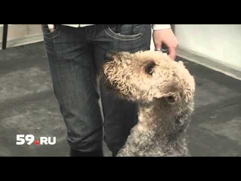 Новости Перми: обрекли собаку на смерть