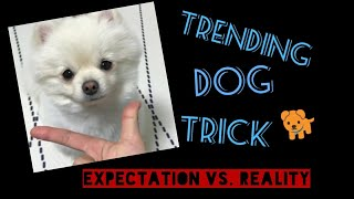 Famous Trending Dog Trick 2018 (Expectation vs. Reality)