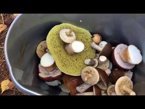 Секреты грибоведов: как не отравиться съедобными грибами