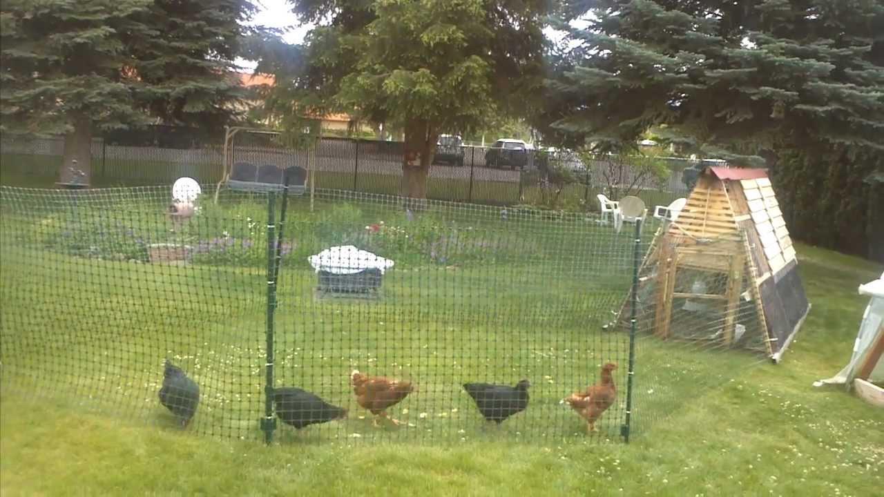 chicken fence run