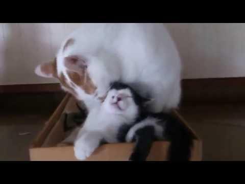 子猫と兄ちゃん Part 1(2016.06.28)