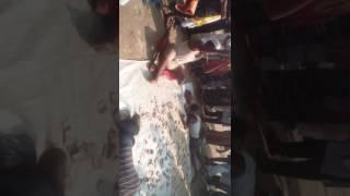 ভিক্ষুকদের ভিক্ষা করার একটি দিস্য। মাদারিপুর ইস্তেমা 2016 ।