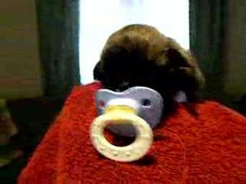 puppy kills the pacifier
