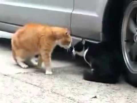 Разговор котов,прикол