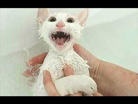 ノー!と訴えるお風呂が嫌いな猫たち
