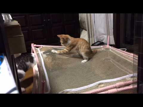 猫たちの遊び場②「洗濯もの干し用ネット」
