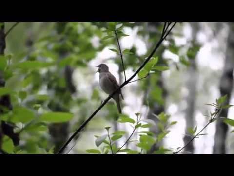 Дубравин песня о земной красоте скачать ноты