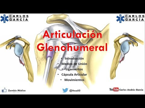 Download Anatomía - Articulación Glenohumeral (Ligamentos, Cápsula ...