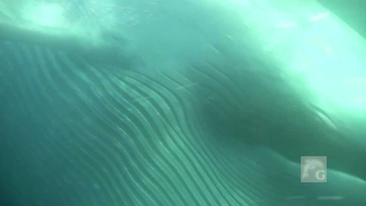 BLUE WHALES SWIM UNDER BOAT! EYE CONTACT!! Dana Point ...