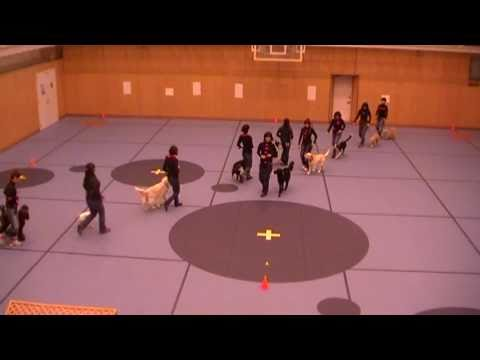 Canine Freestyle Team Performance - Quadrille - カドリール