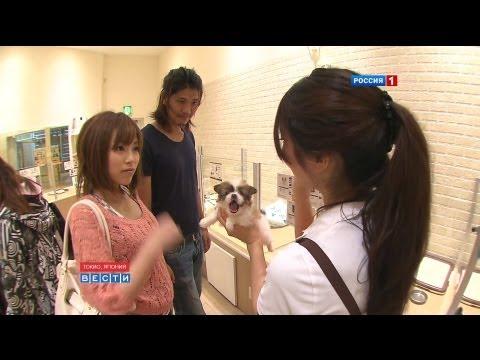 Животные в Японии: право на отдых Animal Rights For Japan 日本における休息及び余暇をもつ権利