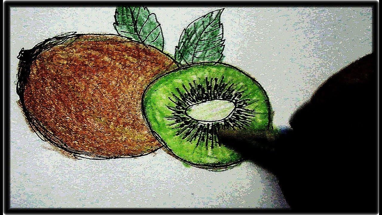 Kiwi Fruit Sketch Kiwi Fruits Drawing