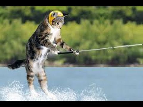 angry cat skis and is eaten by shark 2.0