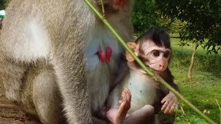 Tarzanna baby monkey, Mommy Jane let me go out,