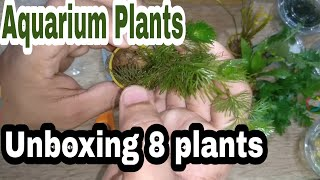 Aquatic plants unboxing India | Bunnycart | Online aquatic plants review