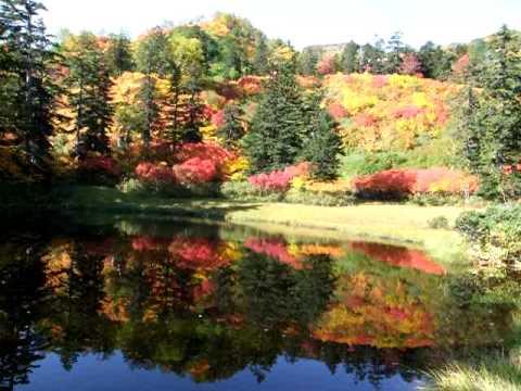 大雪山系 紅葉