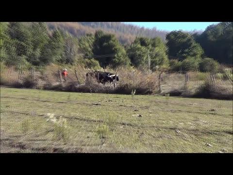 Caza de liebres con Galgos familia Mondaca y amigos 2013