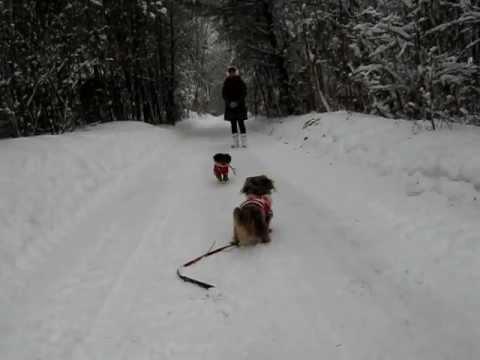 雪大好き (投稿者 : まーぶるパパ さん)