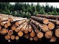 вырубка леса в Англии современная техника
