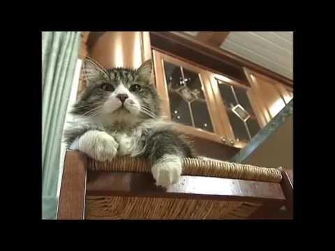 О поведении кошек