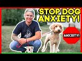 SEPERATION ANXIETY DOG TRAINING FOR FEARFUL DOODLE (TRANSFORMATION)