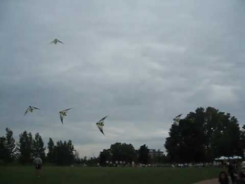 Stunt Kites In Action - Chicago Fire Kite Team