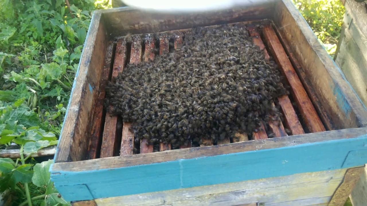 Как сажать пчел в новый улей 36