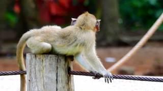So Pity Baby Monkey Duke Lonely Sad Feeling Mom  Abandoned| Who Understand Baby Feel?
