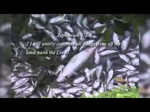 Brazil : Thousands of Dead Fish wash ashore in Rio de Janeiro after sufficating (Mar 15, 2013)