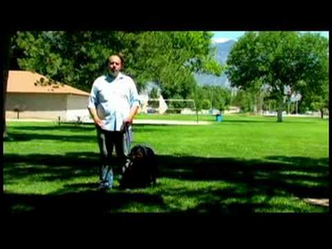 0 Dog Training Tips : How to Train a Dog Not to Bark at Visitors