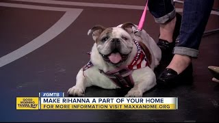 Meet Rihanna, our May 28 Rescues in Action superstar