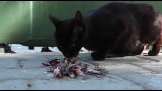 Türkiye'de hayvanlar korunsaydı; biz de bilirdik 'Hayvanları Koruma Günü'nü kutlamayı!