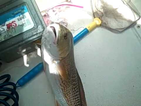 Bradenton Fishing w/ Capt. Brook | Redfish and Sharks