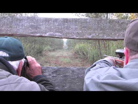 Hunting In Hungary - Wild Boar And Red Stag video