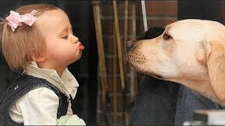 Cute Baby and Labrador dog playing together   Dog loves baby Compilation