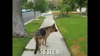 Man tries to test his dog's loyalty But the dog's it may surprise you Full VIDEO